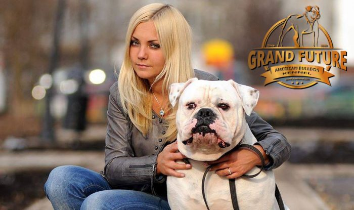 American Bulldog - Grand Champion - Grand Future Pharaoh and kennel founder/owner Olga Sushko