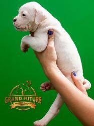 Grand Future Grenada