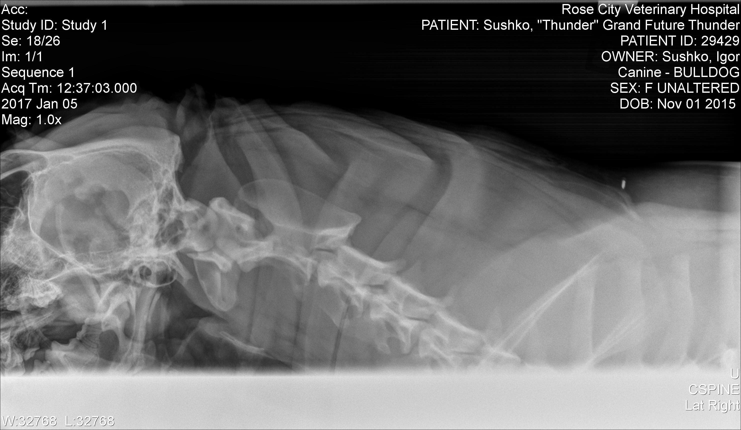 OFA Spine Radiograph